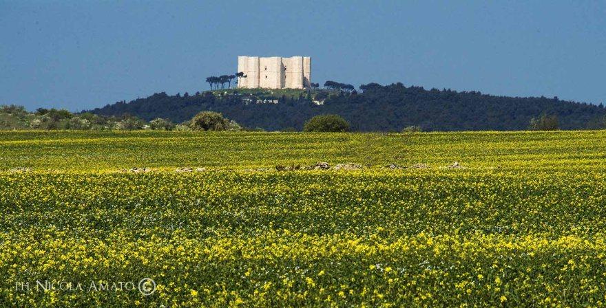 Castel del Monte in Puglia panorama con campo in primo piano e castello sullo sfondo su collina