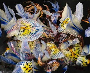 immagine di arte moderna astratta di petali di fiori con screziature di colore indaco e gialle