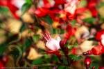 mondo spirituale oltre visibile: composizione di arte astratta con fiori in primo piano e una figura umana sullo sfondo sfuocato con una dominante di colore rosso e toni verdi e beige